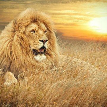 Qué nos revela el Horóscopo sobre Leo