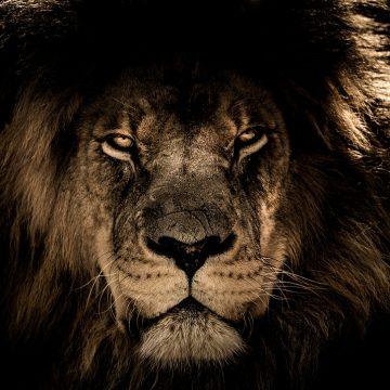 Cómo influye el ascendente Leo en tu personalidad