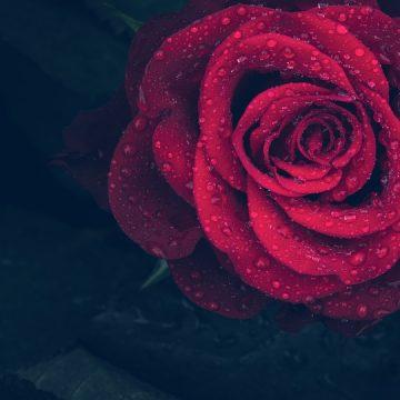 Secretos de Aries en el amor