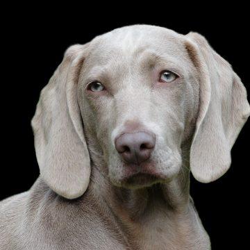 Horóscopo Chino: El signo del perro
