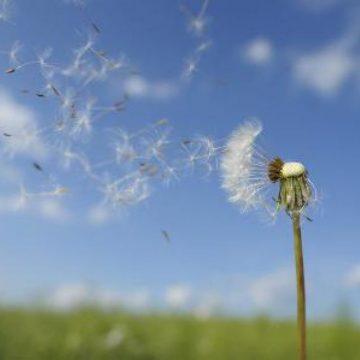 La vida según los signos del elemento Aire